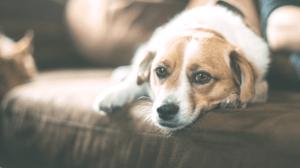 business risks of pets